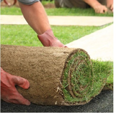 Roll of turf